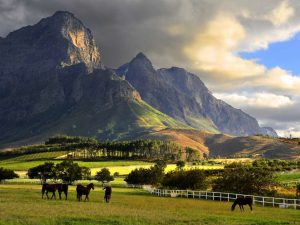 Franschoek Cape winelands