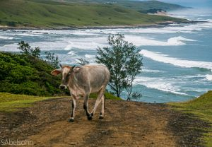 Eastern Cape Wild Coast