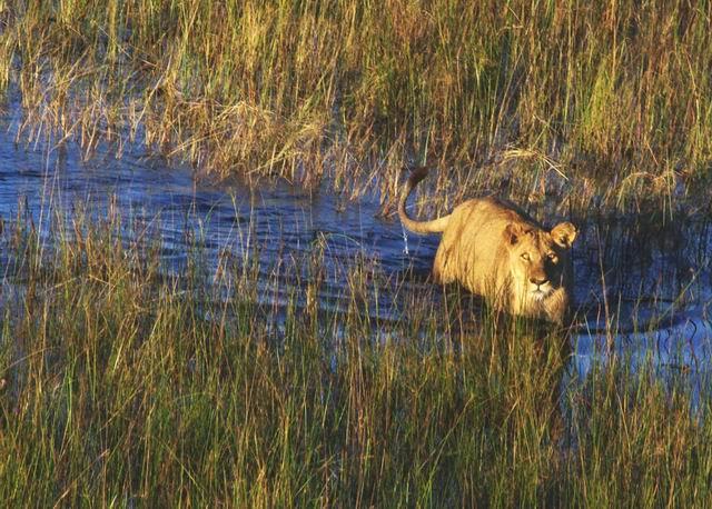 Okavango Delta river safaris