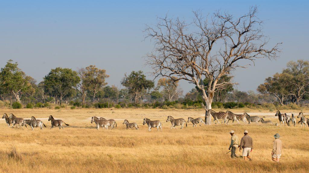 Okavango delta walking safaris text credit to and beyond