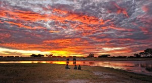 Somalisa Camp Sunset Hwange National Park Zimbabwe
