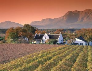 Typical Cape Winelands farm house.