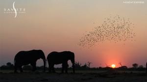 Savutie Elephant Camp